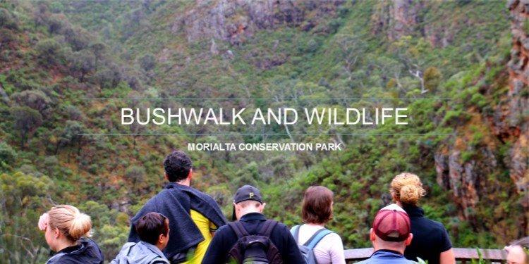 Bushwalk in Morialta Conservation Park