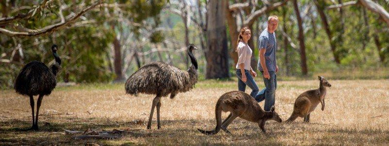 Walking-among-free-roaming-animals-.jpg
