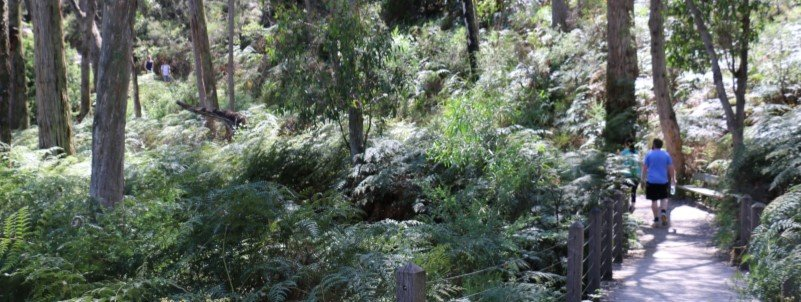 morning hike along trail in adelaide hills