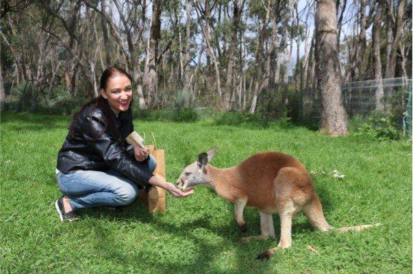 Kangaroos at Cleland Wildlife Park