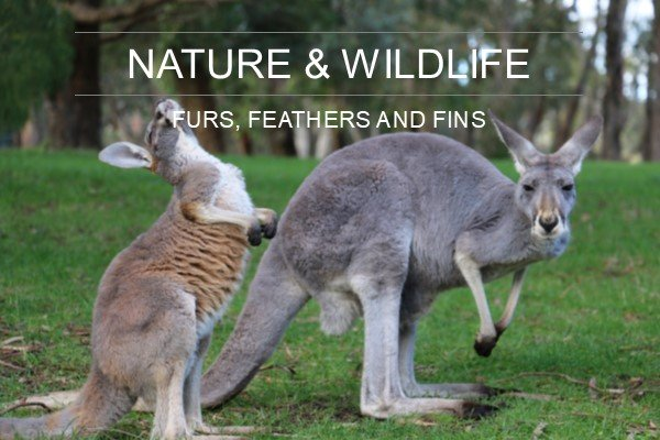 Nature and Wildlife in Adelaide
