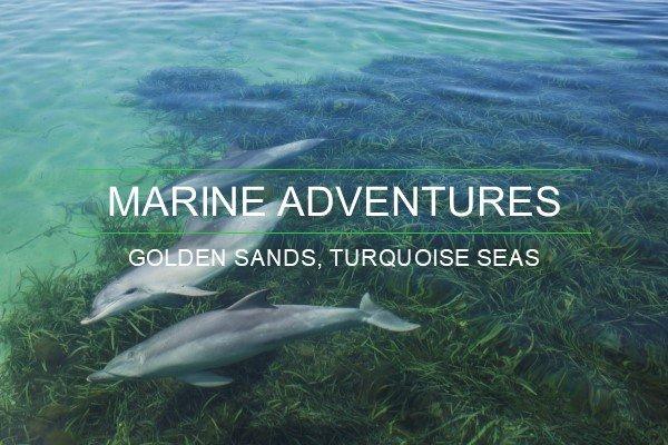 Adelaide Marine Adventures