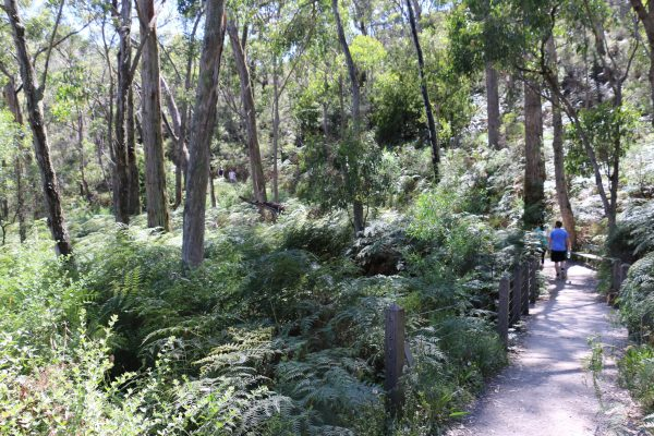 walking tours to from waterfall gully to mount lofty summit