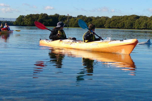 Credit: SA Life Adventure Kayaking SA Dolphin Sanctuary Tours